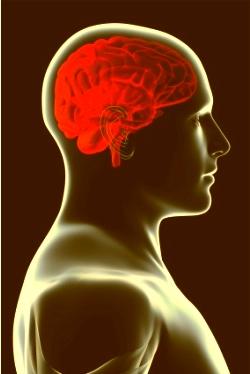 Hoe een goed verhaal het brein kan boeien